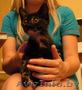 милый котенок в дар - в хорошие руки